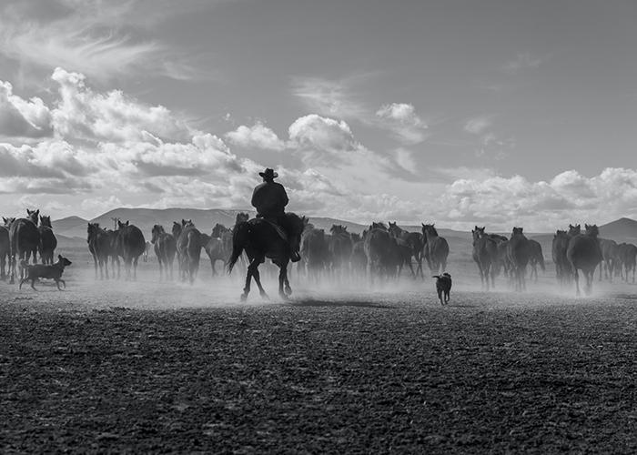 The Cowboy  Problem Part 2